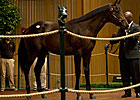 Big Brown Colt Commands $825,000 at Keeneland