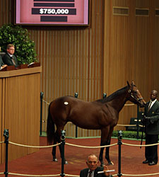 Giant's Causeway Colt Sells for $750,000