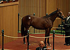 Giant&#39;s Causeway Colt Sells for $750,000