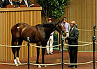 Torrealba Buys Tiznow Filly for $1.75 Million