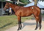 Filly Out of Take Charge Lady New Sale Topper
