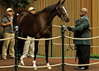 Tiznow Filly Brings $1.1M at Keeneland