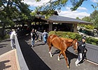 Keeneland September Sale Sees More Gains