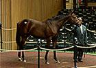 Flatter Colt Brings $425,000 at Fifth Session