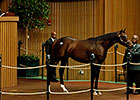 Mineshaft Colt Brings $485,000 From Albaugh