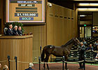 War Front Colt Gets Keeneland Session Rolling