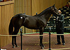 The Factor Colt Hammers for $600,000
