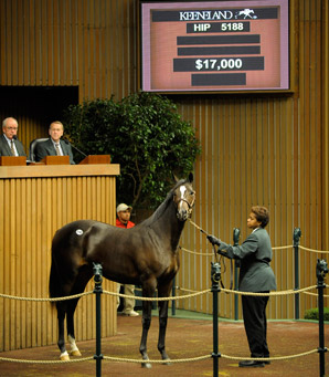 Keeneland Sale Ends With Major Declines