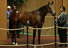 Bernardini Colt Brings $925,000 at Keeneland