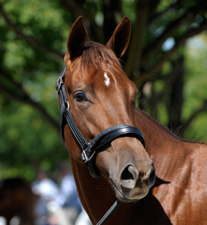 Azeri's Filly Sells for $800,000 at Keeneland