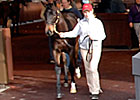 Saint Liam Colt Brings $220,000