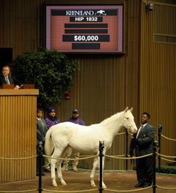 $60,000 White Colt Will Be Resold