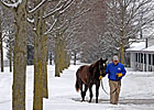 Snow, Cold Don&#39;t Stop Show at Keeneland