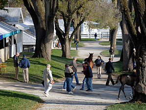 Tiznow Colt Tops Keeneland's Saturday Session