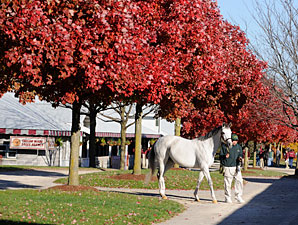 Empire Maker Fillies Top Keeneland Session
