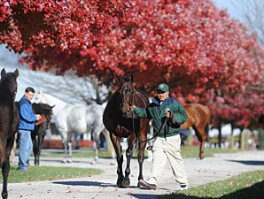 Lease of Life Brings $110,000 at Keeneland