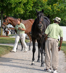 Keeneland: Powerscourt Colt Highlights Day 12