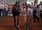 Giant's Causeway Colt Tops Keeneland Session