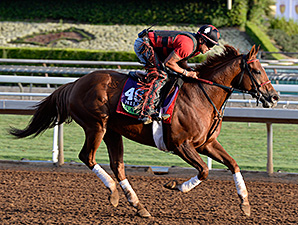 Kaigun preps for the 2014 Breeders' Cup.
