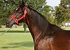 Kandaly, 1994 Louisiana Derby Winner, Dies