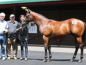 Fastnet Rock Rules Market at Karaka
