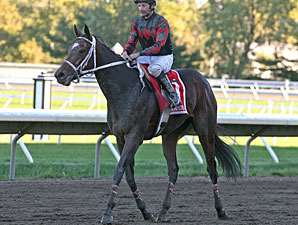 Karmageddon wins the 2010 Princeton Stakes.