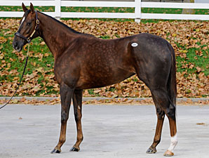 Swift Temper Bought Back for $2,050,000