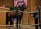 Porter Buys Speightstown Colt for $560,000
