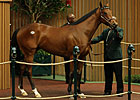 Unbridled&#39;s Song Filly Brings $700,000
