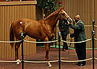 Tapit Sibling Brings $1 Million at Keeneland