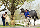 Keeneland Sale Shows Signs of Stabilization