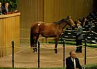 &#39;Diva&#39; Brings $825,000 at Keeneland