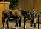 Outlook Brighter at Keeneland January Sale
