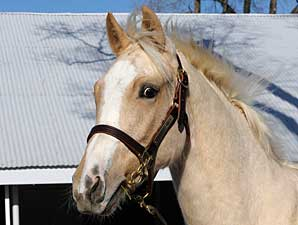 Palomino Filly Arrives at Keeneland
