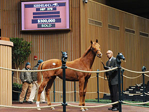 Candy Ride Colt Brings $300,000 at Keeneland