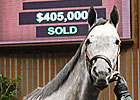 Alpha Kitten Hammered Down for $405,000