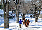 Keeneland Jan. Sale Set to Kick Off 5-Day Run