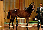 Empire Maker Filly is Top Yearling at $400K