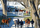 Yearlings Lead Way on Day 3 of Keeneland Sale