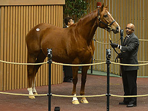 Vyjack's Dam Sells for $750,000 at Keeneland