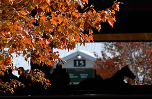 Carrion to Disperse at Keeneland