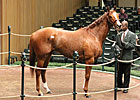 Buy-Back Rate Holding Steady at Keeneland