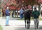 Keeneland November: Book 1 Hips to Watch