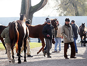 Worldly Co-Topper at Keeneland November Day 7