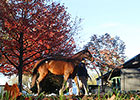 Central Banker Leads Keeneland Session
