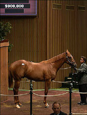 Distorted Humor Colt Brings $900,000 Thursday