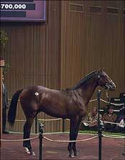 Unbridled's Song Colt Sells for $700,000 Thursday