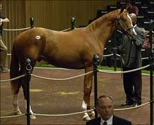Keeneland Sale Trickles Down, Key Figures Are Up