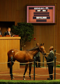 Dynaformer Colt is Tops Early at $610,000
