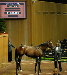 Keeneland Sept. Sale Market Still Merciless